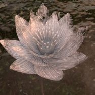 As the lilies bloom - experimental VR project